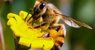 Albinele si lumea albinelor